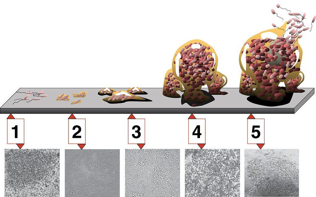 How to remove biofilm