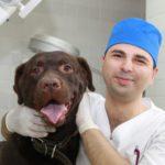 vet and dog